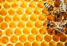 Bal ile ilgili doğru bilinen yanlışlar neler? Balın mucizevi faydaları neler? Balın zararı var mı? Sahte bal nasıl anlaşılır? Nasıl bal alınmamalı?