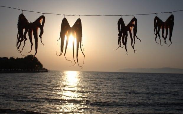 yunan adaları ahtapot yemekleri Sykaminia midilli lesvos