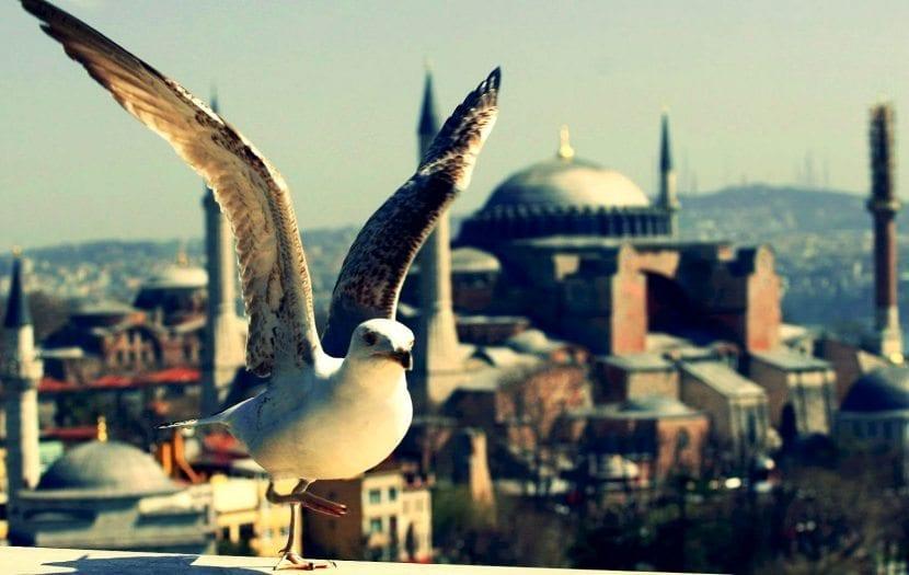 Tarihi Yarımada: İstanbul'un tarihine unutulmaz yolculuk