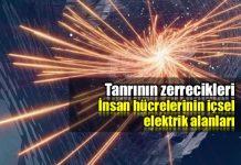Tanrının Zerrecikleri: İnsan hücrelerinin içsel elektrik alanları