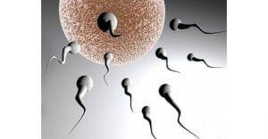 erkeklerde_obezite_sperm_hucrelerini_etkiliyor_