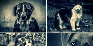 Kalbimdeki Patiler, sokak hayvanları için fotoğraf sergisi düzenliyor
