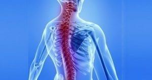 osteopati-kas-iskelet-sistemi