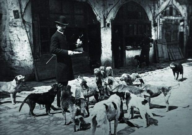 istanbulun sokak köpekleri