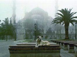 Dört Ayaklı Belediye: İstanbul'un Sokak Köpekleri sergisi