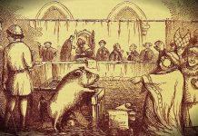 Hayvanlar yargılanabilir mi? ortaçağ avrupa domuz yargılanıyor dava
