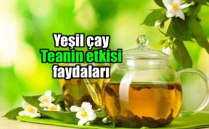 Yeşil çay içeriğindeki teanin etkisi faydaları neler?