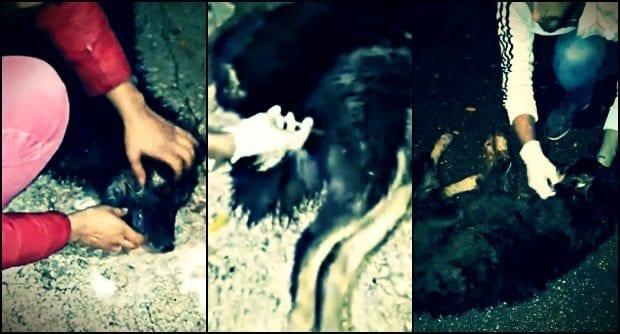 Sapanca Belediyesi'nin sokak köpekleri açıklaması