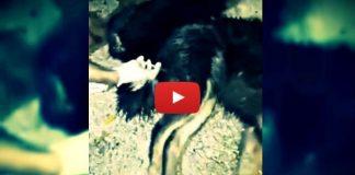 Sapanca'da katliam var: Hayvanlar zehirlendi!