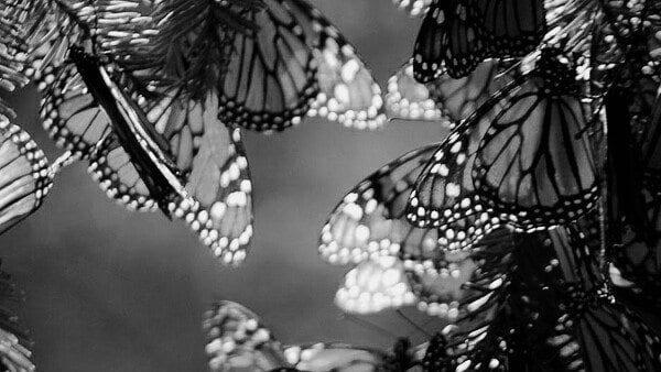 Kelebek gibi insan: Tırtıl iken kelebek olmak