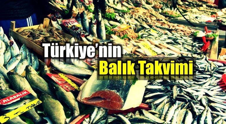 türkiye balık takvimi hangi ayda hangi balık yenir