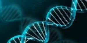 yaslanmada genetigin önemi