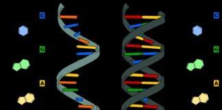 Yaşlanmayı genetik şifreler belirliyor