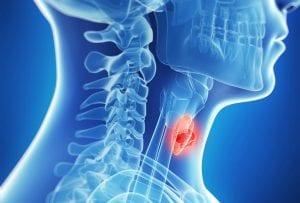 gebelikte-tiroid-hormonu