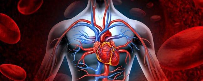 kalp ana damarının yırtılması