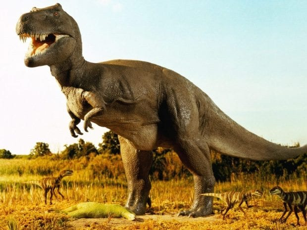 Kehribar taşında 99 milyon yıllık dinozor fosili bulundu