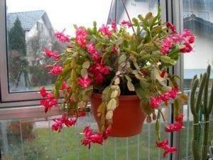 kisin-cicek-acan-bitkiler