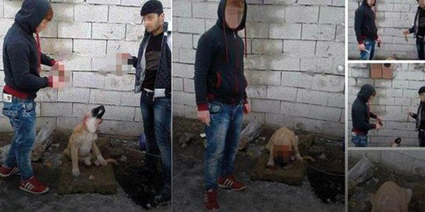 Hasan Kuzu ve Neşet Yaman isimli iki kişi bir köpeği bağlayarak kulaklarını kesti ve görüntüleri sosyal medyada açık bir şekilde paylaştı.