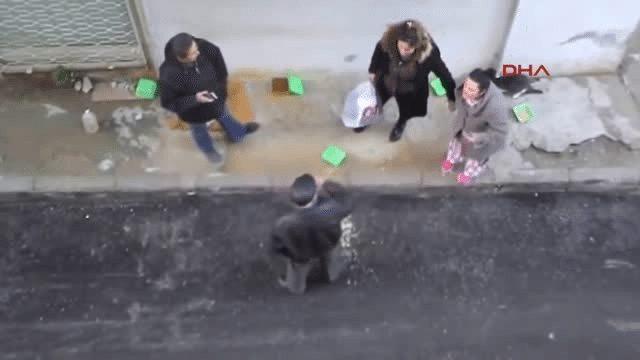izmir balçova sokakta kedi besleme kavgası
