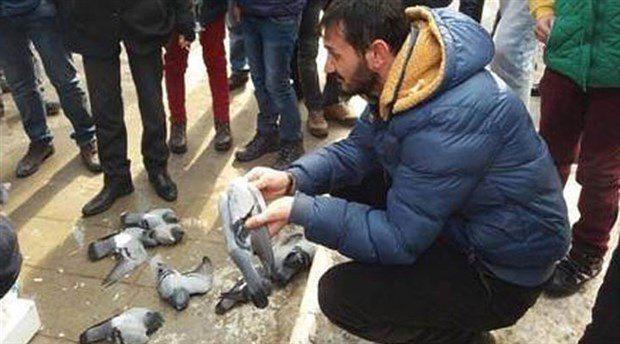 Yer: Kırıkkale Hüseyin Kahya Parkı Yüzlerce güvercin, zehirli yem verilerek, telef edildi...