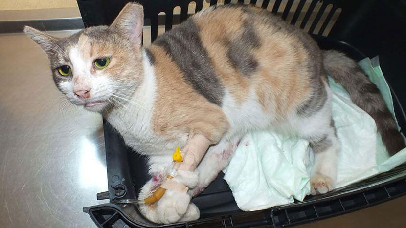 marmaris kediye tecavüz