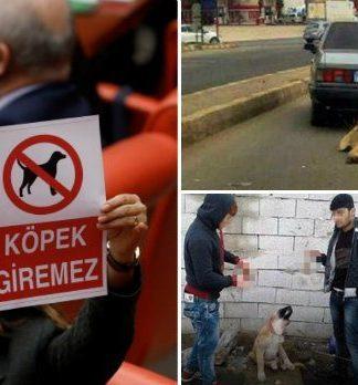 Mecliste 'Dikkat köpek giremez' afişi tutanlar 'köpek' kelimesini hakaret olarak kullanırsa hayvanlara yönelik şiddetin sonu gelir mi?