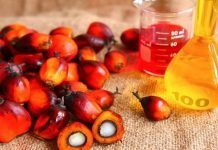 Palm yağı nedir, kanserojen madde içeriyor mu?