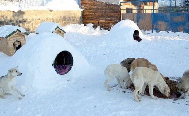 Soğukta sokak hayvanları nasıl korunabilir?