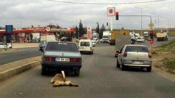 Tekirdağ'ın Çorlu İlçesi'nde 55 yaşındaki M.V. isimli şahıs otomobilin arkasına bağladığı köpeği metrelerce sürükleyerek götürdü.