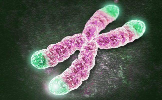 telomerler