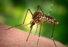 Zika virüsü nedir? Boğaziçi Üniversitesi araştırma başlattı