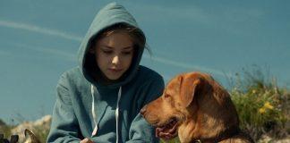 Kuyruklu Hikayeler: Beyaz perdeye yansıyan köpek hikayeleri