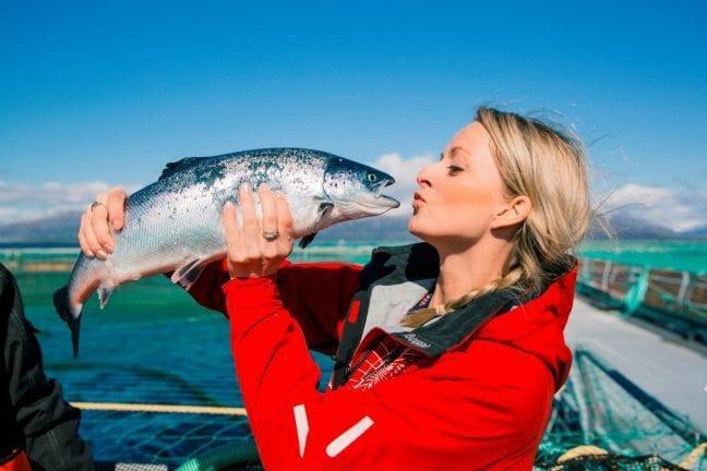 balık sektörü