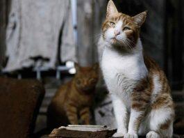 """Haytap yararına sahipsiz hayvanlar için: """"Yuva Beklerken"""" fotograf Sergisi"""