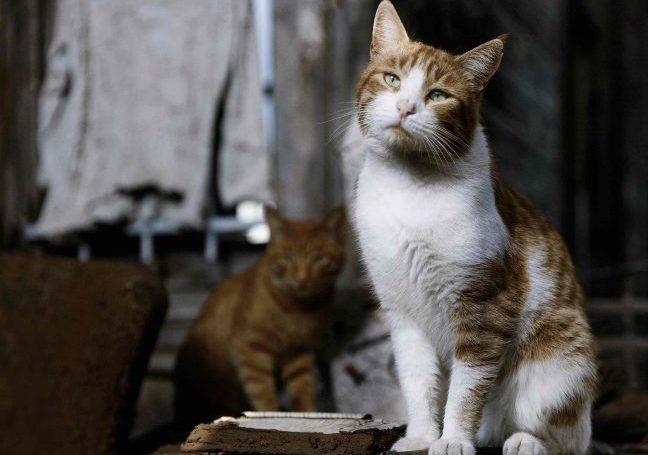 """Haytap yararına sahipsiz hayvanlar için:""""Yuva Beklerken"""" fotograf Sergisi"""