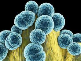 Dünya Sağlık Örgütü: Acil olarak yeni antibiyotiklere ihtiyaç var
