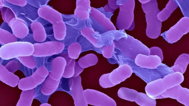 Dünya Sağlık Örgütü: Acil olarak yeni antibiyotikler gerekiyor