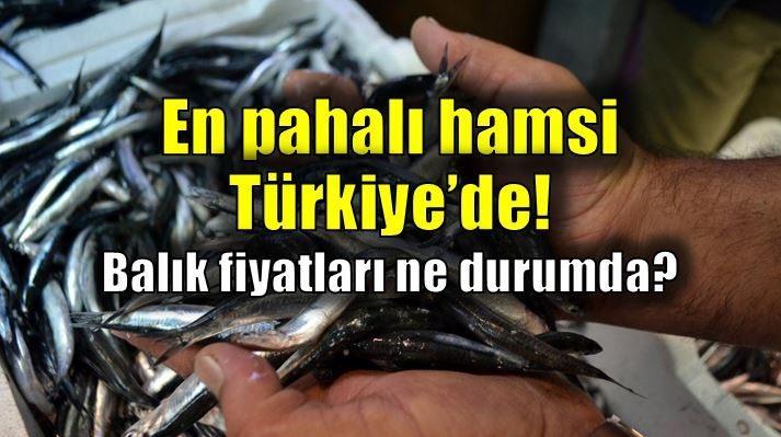 En pahalı hamsi Türkiye'de! Balık fiyatları ne durumda?