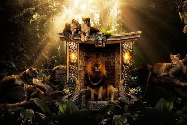 Aslanlar nasıl ormanların kralı oldu?