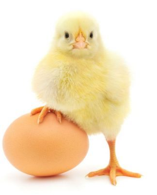 Yumurtanın faydaları neler? Anne sütü kadar yararlı mı?