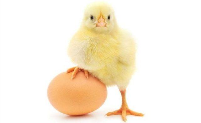 Yumurta'nın faydaları neler? Anne sütü kadar yararlı mı?