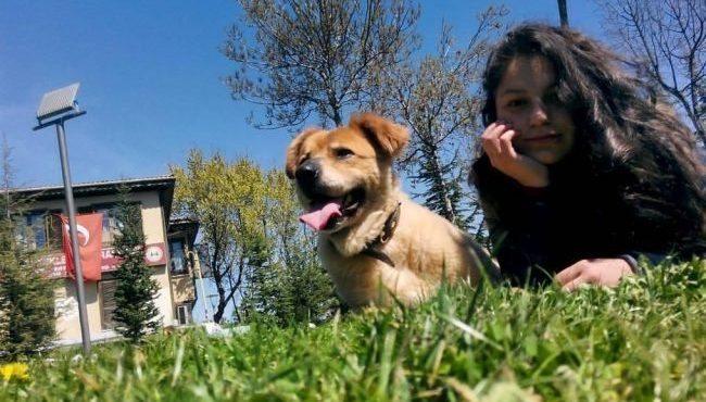 köpek korkusu damla karaboya sokak hayvanları