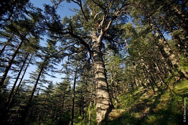 Çiğikara, Antalya (Fotoğraf: Ali İhsan Gökçen) dünya saati akdeniz ormanları wwf türkiye