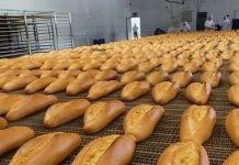 GDO'lu ekmek hakkında soruşturma:GDO Nedir?