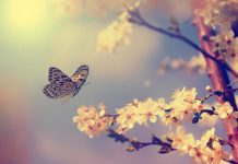 21 mart ekinoksu bahar nevruz