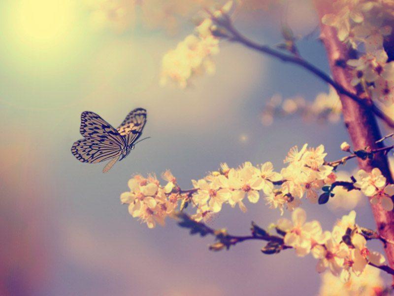 bahar 21 mart ekinoksu