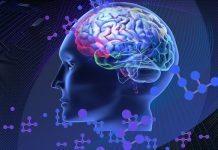 Beyin ile bilgisayar arasındaki en önemli fark nedir?