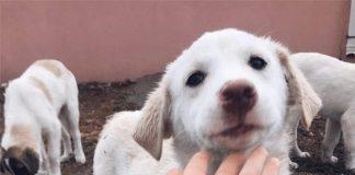 Dokuz Eylül Üniversitesi Empati Hayvan Dostları Topluluğu