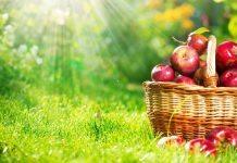 Elmanın faydaları neler? Hangi hastalıklara iyi geliyor?