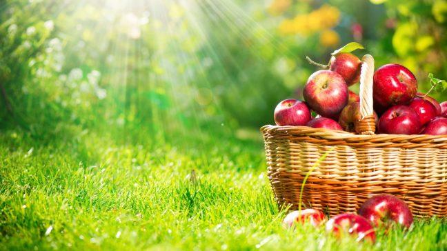 Elma'nın faydaları neler? Hangi hastalıklara iyi geliyor?